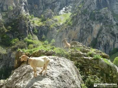 Ruta Cares-Picos de Europa; el camino del agua valle de las batuecas sierra norte de guadalajara